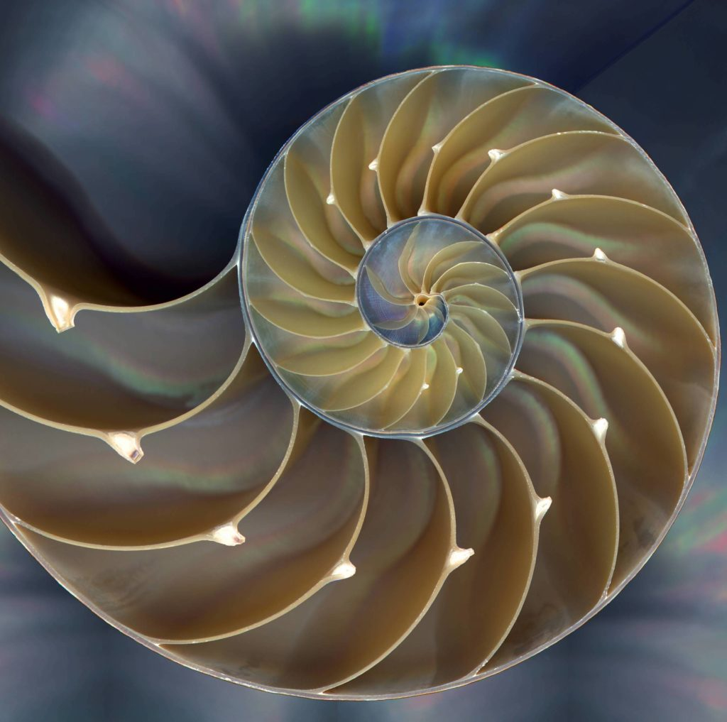 Embracing the Sacred Symbol of the Chambered Nautilus - Somanautiko